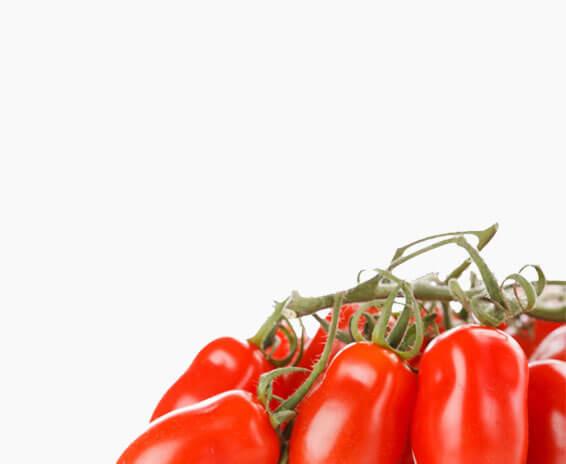 Inserbo srl - Pomodori corbarini