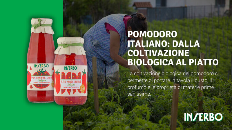 Pomodoro italiano: dalla coltivazione biologica al piatto